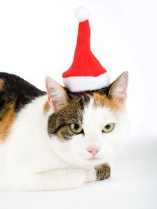 Spotted Cat And A Santa Hat Royalty Free Stock Photos