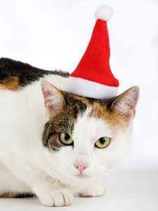 Spotted Cat And A Santa Hat Royalty Free Stock Photography