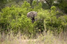 Free Elephant In Kruger Park Stock Photography - 7713642