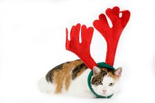 Free Cat Dressed As A Reindeer Royalty Free Stock Photo - 7714965