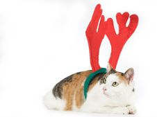 Free Cat Dressed As A Reindeer Stock Photos - 7714973