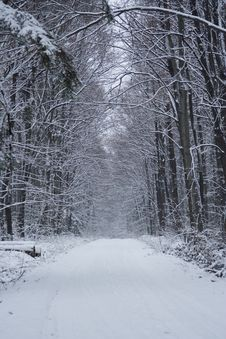 Free Winter Stock Photography - 7715052