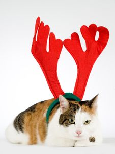 Free Cat Dressed As A Reindeer Stock Image - 7715061