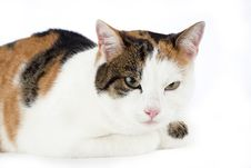 Spotted Cat, Isolated Stock Photos