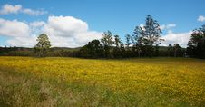 Free Sunflower Stock Photos - 7715563
