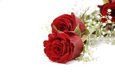 Free Red Roses Stock Image - 7716301