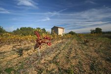Free Vineyards, Provence, France Royalty Free Stock Photography - 7716917