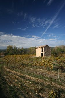 Free Vineyards, Provence, France Stock Images - 7717874