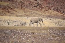 Free Mother And Daughter Elephant Royalty Free Stock Photo - 7717905