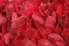 Free Petals Of Scarlet Roses As Background Stock Photography - 7718112