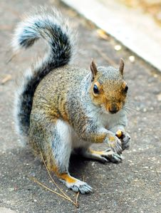 Free Squirrel Stock Photos - 7719133