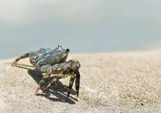 Free Crab Stock Photography - 7719312