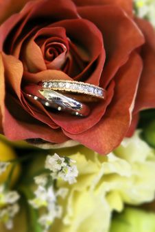 Free Rings In A Rose Stock Photos - 7720753