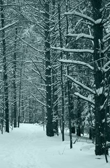 Free Winter Stock Images - 7720804