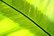 Free Palm Leaf. Close Up Stock Photos - 7720933