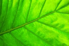 Free Leaf. Close Up Royalty Free Stock Images - 7720939