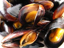 Free Steamed Muscles Stock Image - 7721051
