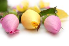 Free Tree Roses: Pink And Yellow Royalty Free Stock Images - 7722679