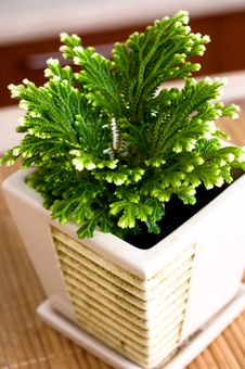 Free Pot Plant Lasting On The Table. Stock Photography - 7723232