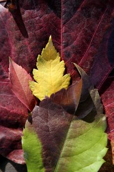 Free Leaves Still Of Autumn Leaves Stock Photography - 7724742