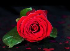 Free Saint Valentine Single Red Rose Over Hearts Royalty Free Stock Image - 7726136