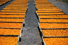 Dried Apricot Facilities Stock Photography