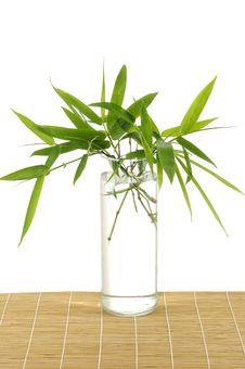 Free Green Bamboo Stock Image - 7727691