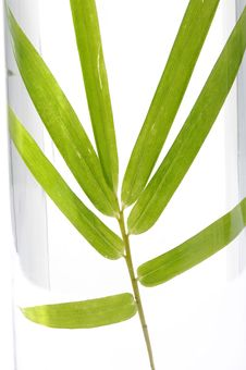 Free Green Bamboo Stock Photos - 7727713