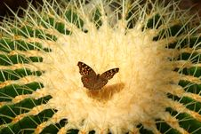 Free Butterfly Stock Photos - 7728893