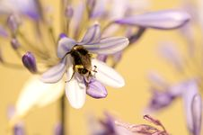 Free Bee On Flower Stock Photo - 7729170