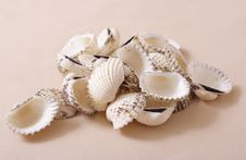 Free Seashells Royalty Free Stock Photo - 7729455