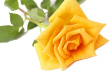 Free Dark Yellow Rose On White Royalty Free Stock Image - 7729656
