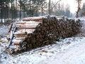 Free Deforestation Stock Photo - 7730490