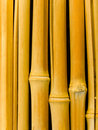 Free Tree A Bamboo Trunks Stock Image - 7732961