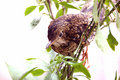 Free Bird Stock Photo - 7736140