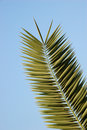 Free Palm Leaf Royalty Free Stock Image - 7736326