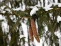 Free Beautiful Seasonal Snow Stock Image - 7739611