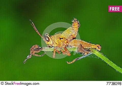 Dead grasshopper in the park Stock Photo
