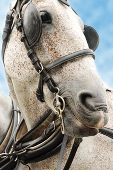 Free Portrait Of A White Horse Stock Photos - 7730593