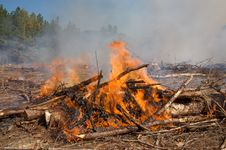 Free Flames And Smoke From A Prescribed Fire Burn Stock Photography - 7730662