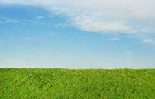 Free Grass And Sky Stock Photos - 7731663