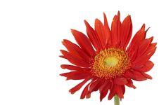 Free Sunflower Stock Image - 7731691