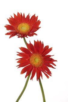 Free Sunflower Stock Photography - 7731782