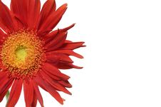 Free Sunflower Royalty Free Stock Photography - 7731897