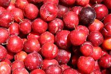 Free Harvest Royalty Free Stock Image - 7731956