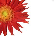 Free Sunflower Stock Images - 7731964