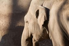 Free Elephant Royalty Free Stock Photography - 7732197