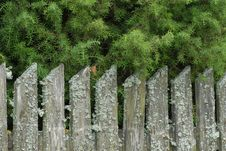 Free Old Fence Royalty Free Stock Photos - 7732378