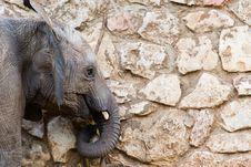 Free Elephant Stock Photo - 7732430