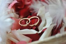 Free Roses Petals And Rings Stock Photos - 7732673
